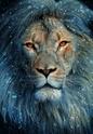 Donjon de Poche : Campagne Sombre Lion_d10