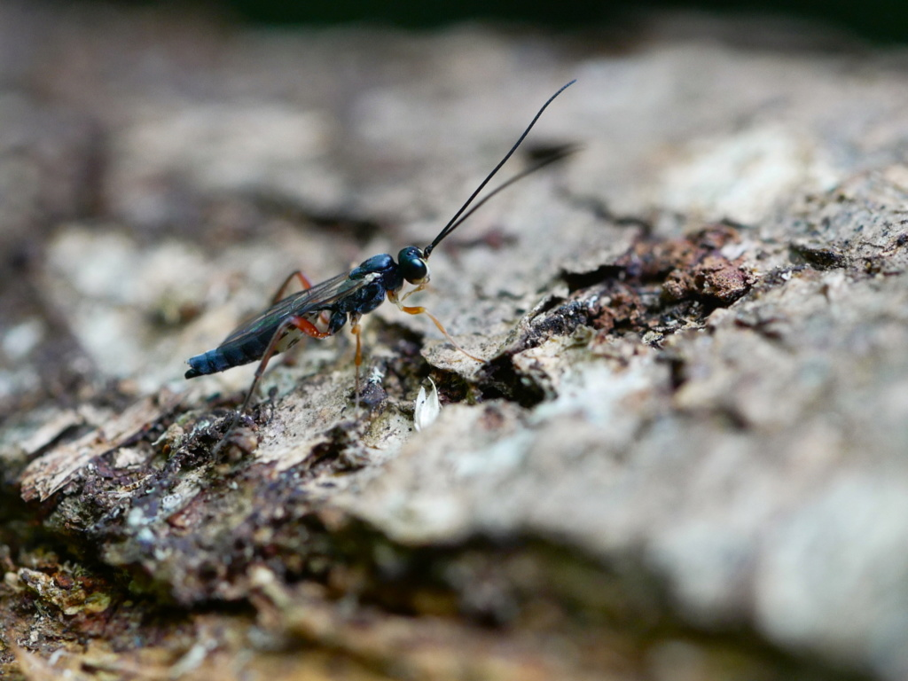 Un insecte sur une bûche P1100810
