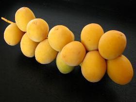 Mangez des dattes... c´est bon !! 0139