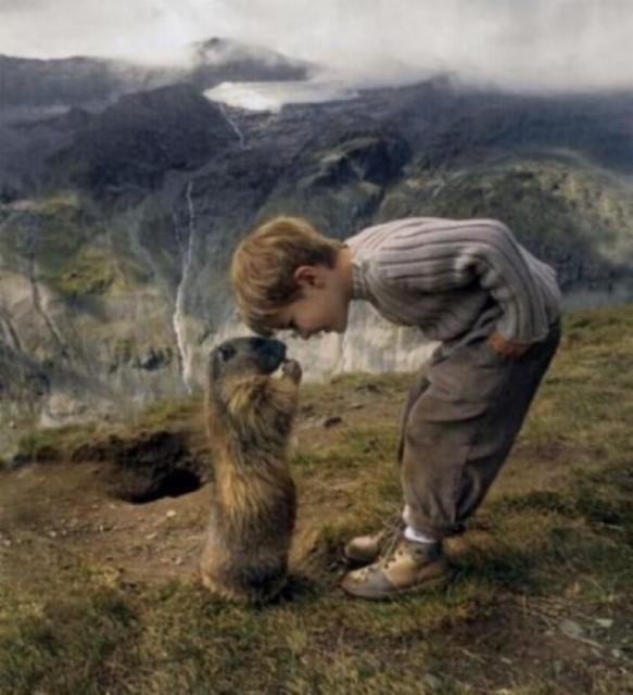 Un gamin qui sait parler aux marmottes G_0263