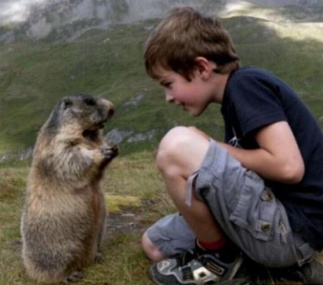 Un gamin qui sait parler aux marmottes G_0358