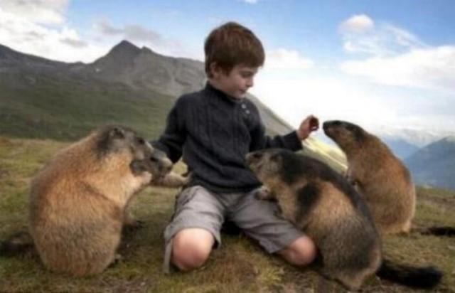 Un gamin qui sait parler aux marmottes G_0658