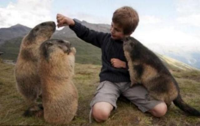 Un gamin qui sait parler aux marmottes G_0756