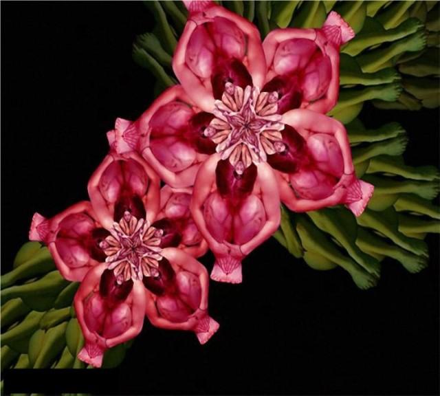 Le corps humain en fleurs * G_0815