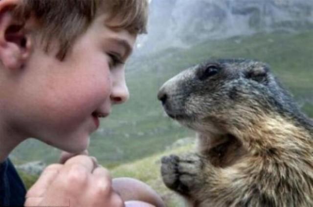 Un gamin qui sait parler aux marmottes G_0855