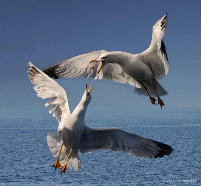Les oiseaux du monde * X_0111