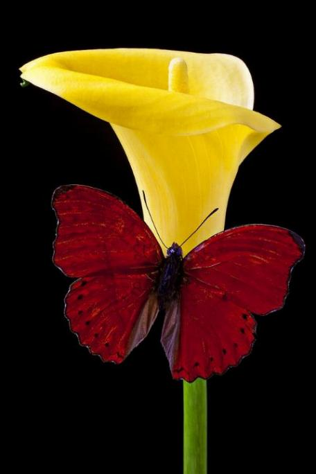 Merveilles de la nature - les papillons - X_0121