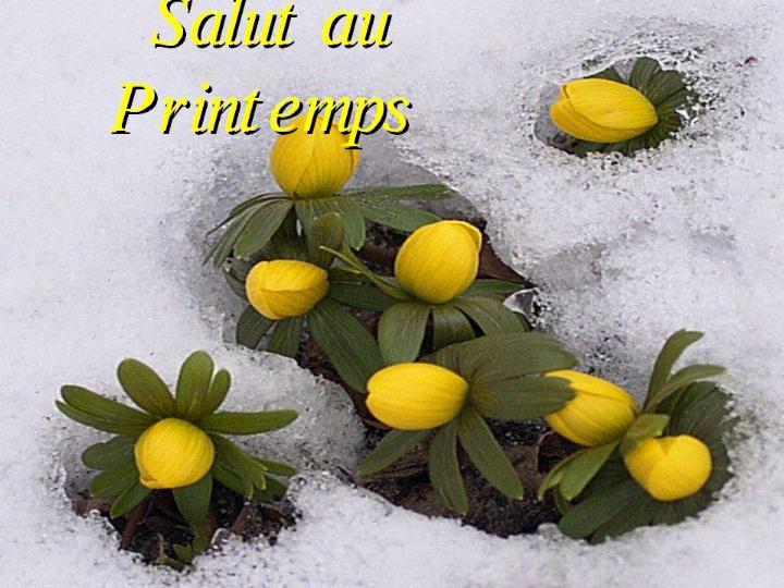 Bonjour printemps* X_0175