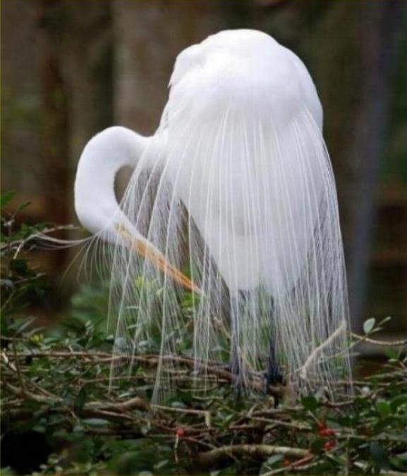 Les oiseaux du monde * X_0212