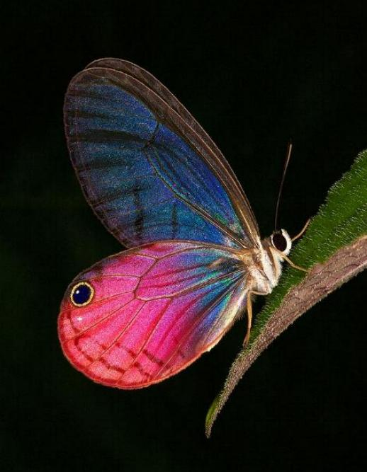 Merveilles de la nature - les papillons - X_0225
