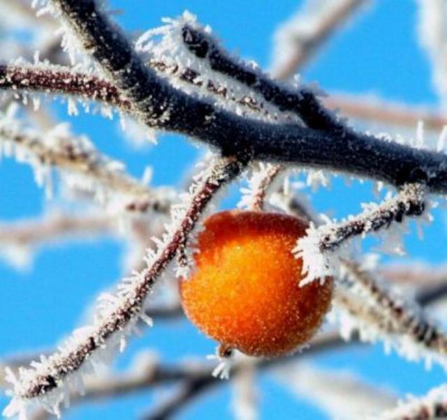 Beauté hivernale * X_0256