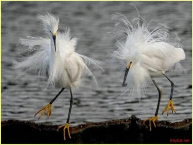 Les oiseaux du monde * X_0313