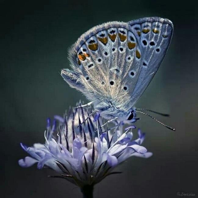 Merveilles de la nature - les papillons - X_0322