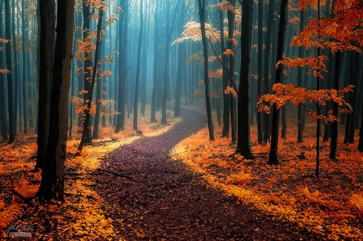 Des Chemins où la randonnée devient un rêve - X_03_c11