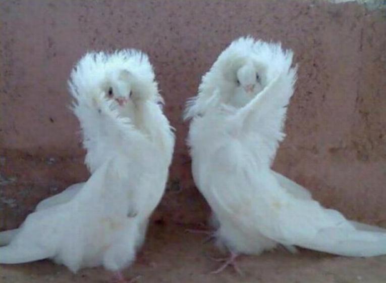 Les oiseaux du monde * X_0412