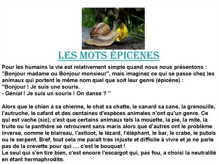 Cocasseries de la langue française * X_04167
