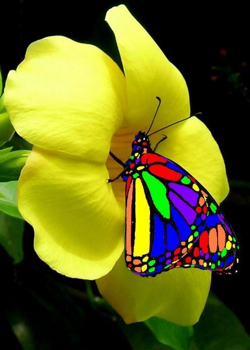 Merveilles de la nature - les papillons - X_0424