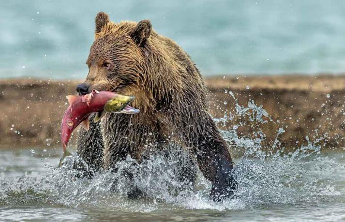 Kamchatka pays des ours et des volcans - X_0442