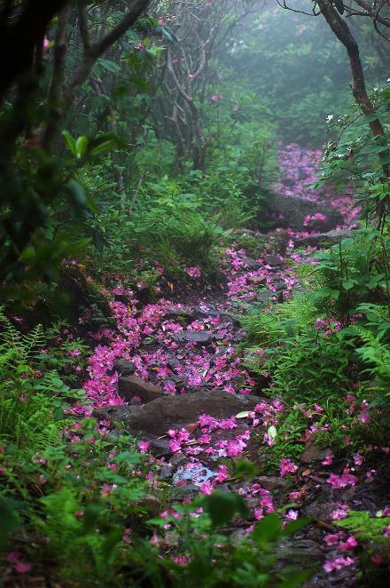 Des Chemins où la randonnée devient un rêve - X_04_v10