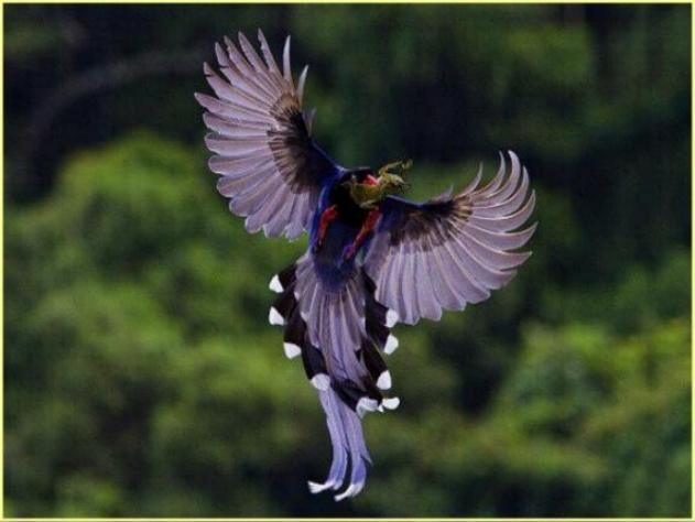 Les oiseaux du monde * X_0512