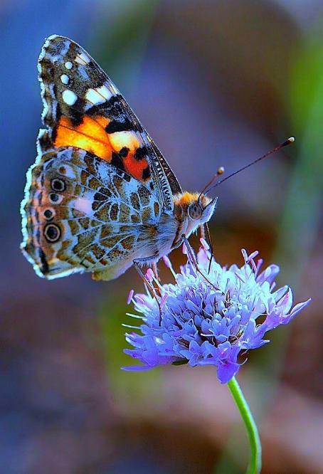 Merveilles de la nature - les papillons - X_0522