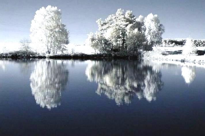 Beauté hivernale * X_0549