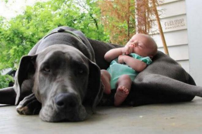 Chiens baby sitter - Page 5 X_0666
