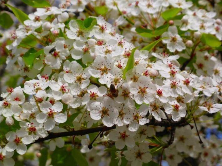 Bonjour printemps* X_0682