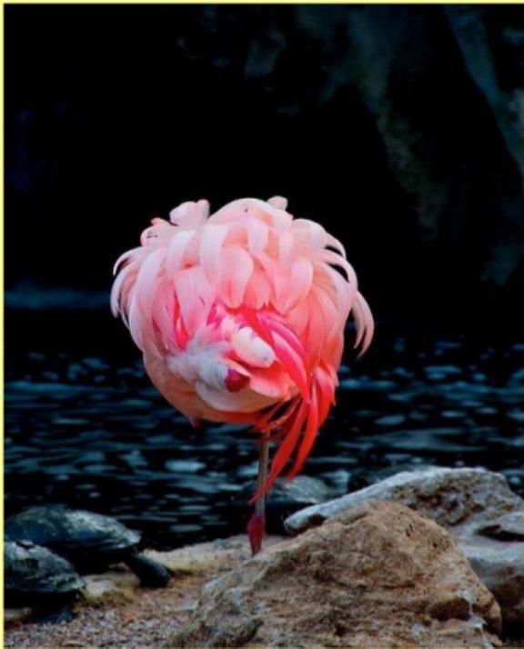 Les oiseaux du monde * X_0712