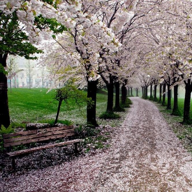 Des Chemins où la randonnée devient un rêve - X_07_c10