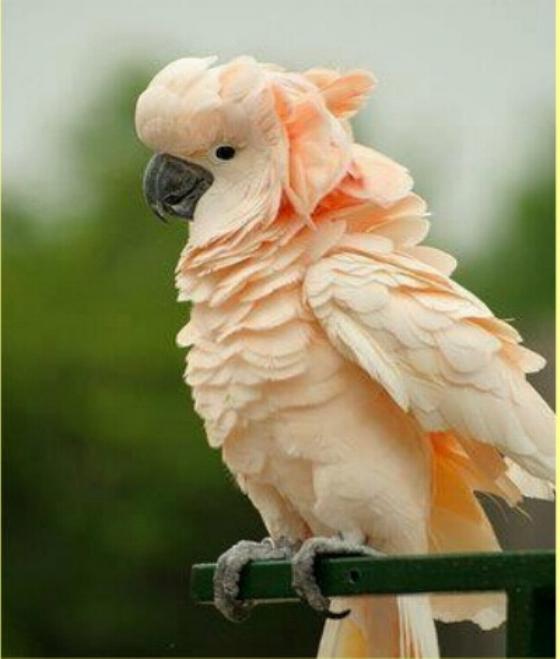 Les oiseaux du monde * X_0812