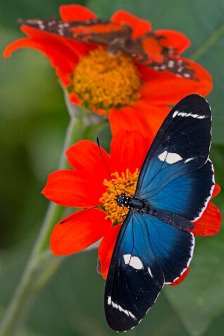 Merveilles de la nature - les papillons - X_0824