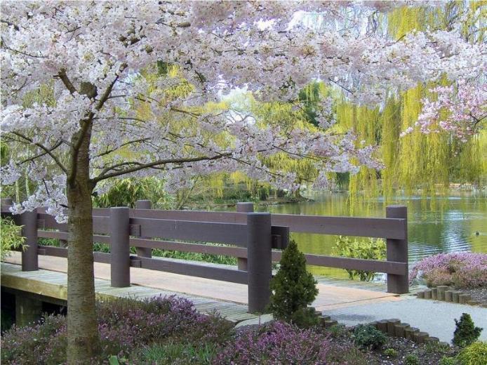 Bonjour printemps* X_0880