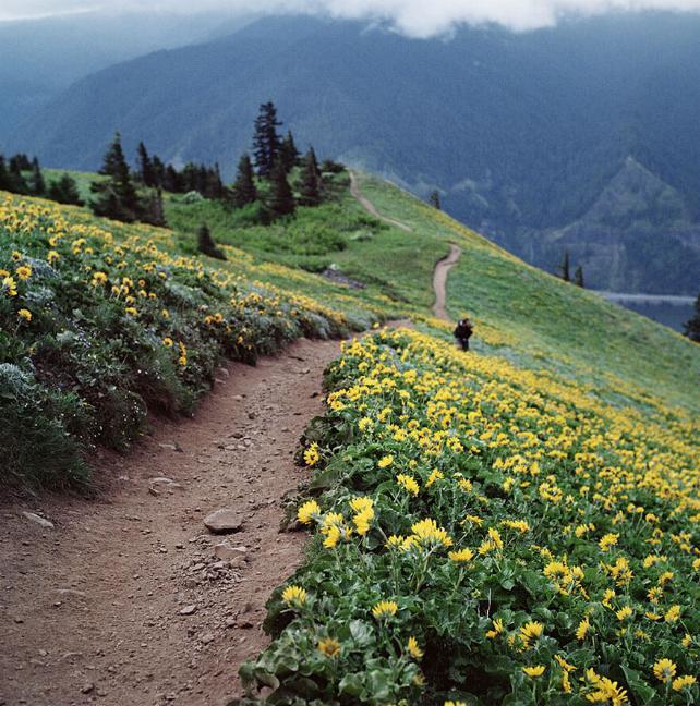 Des Chemins où la randonnée devient un rêve - X_08_u10