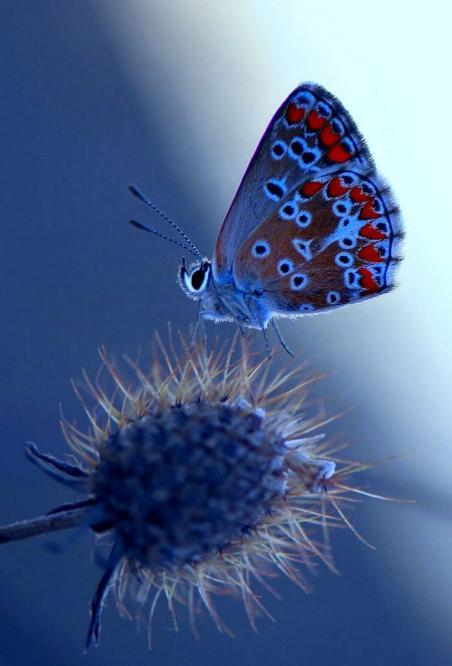 Merveilles de la nature - les papillons - X_0921