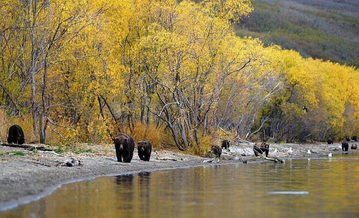 Kamchatka pays des ours et des volcans - X_0938