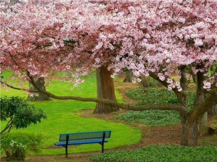 Bonjour printemps* X_0978