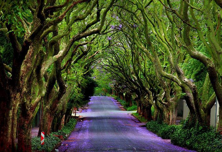 Des Chemins où la randonnée devient un rêve - X_09_a12