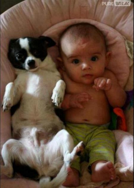 Chiens baby sitter - Page 6 X_10117
