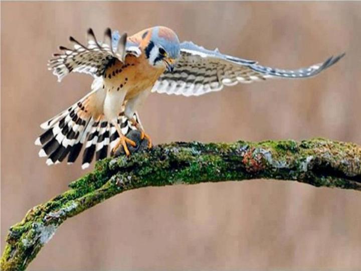 Les oiseaux du monde * - Page 5 X_10213