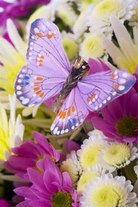 Merveilles de la nature - les papillons - X_1023