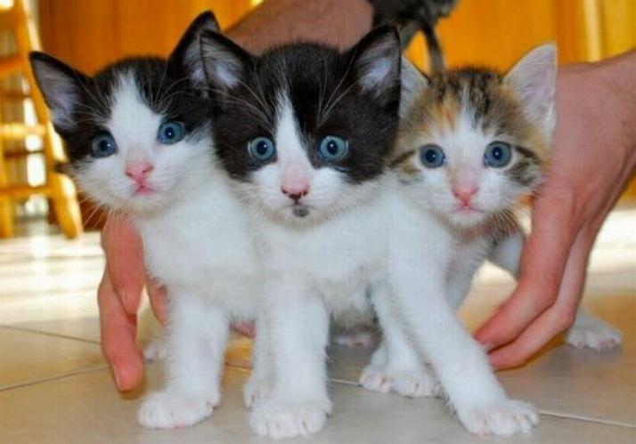 Les chats - nos petits compagnons - Page 5 X_10310