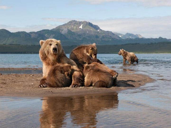 Kamchatka pays des ours et des volcans - X_1036