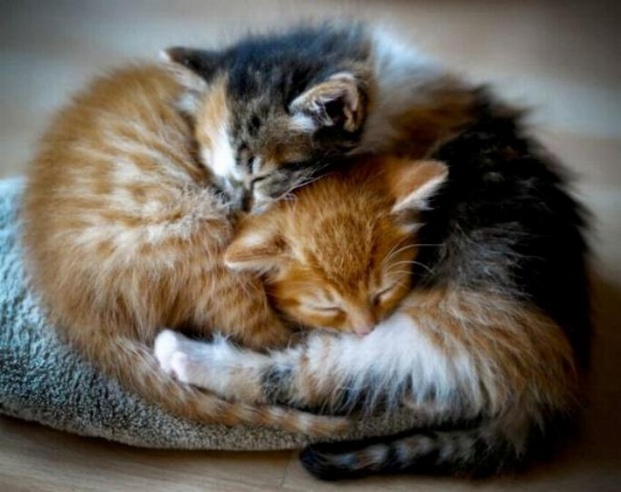 Les chats - nos petits compagnons - Page 5 X_10410