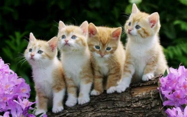 Les chats - nos petits compagnons - Page 5 X_10510