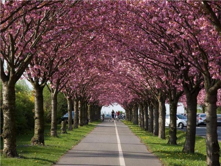Bonjour printemps* X_1071