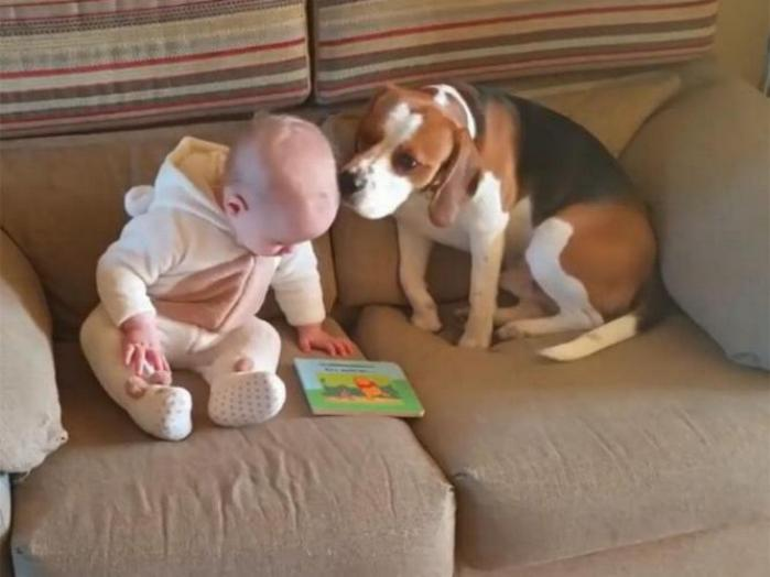 Chiens baby sitter - Page 5 X_10811