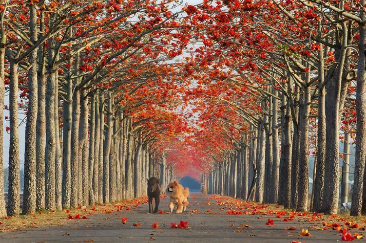 Des Chemins où la randonnée devient un rêve - X_10_t10