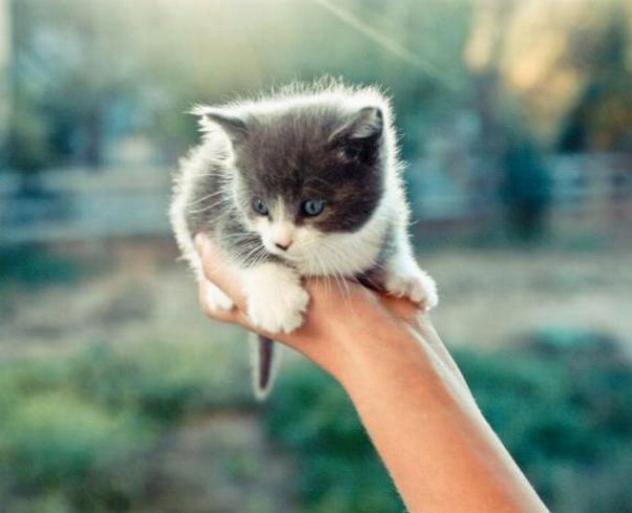 Les chats - nos petits compagnons - Page 5 X_11010