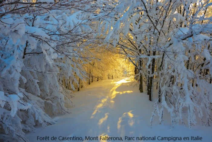 Beauté hivernale * - Page 5 X_11017
